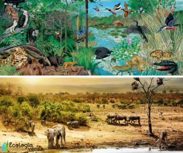 Tipos de biodiversidad - Biodiversidad de ecosistemas