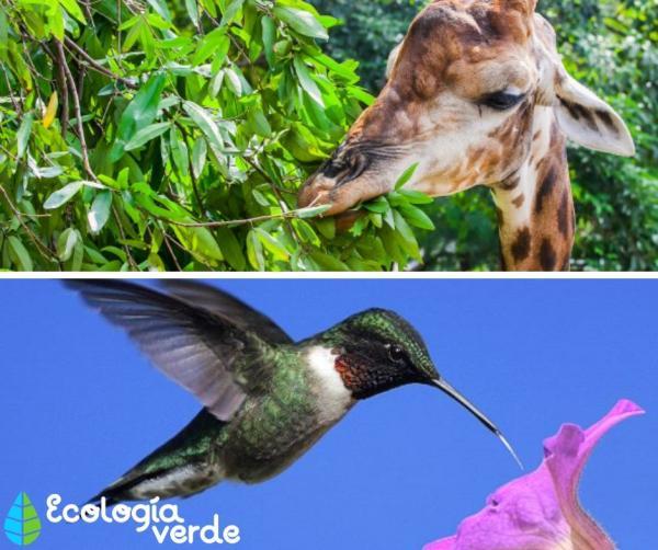Tipos de biodiversidad - Biodiversidad genética
