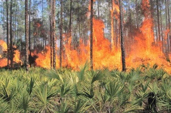 Por qué los orangutanes están en peligro de extinción - Reducción de su hábitat
