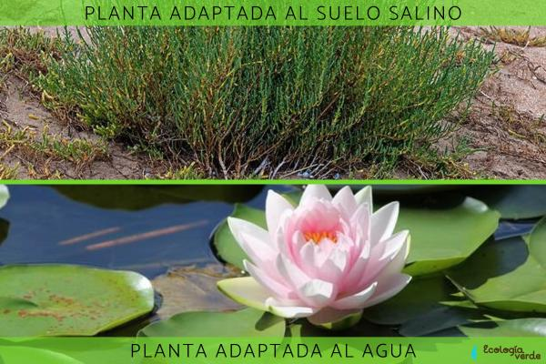 Adaptaciones de las plantas: tipos y ejemplos - Adaptaciones de las plantas al suelo