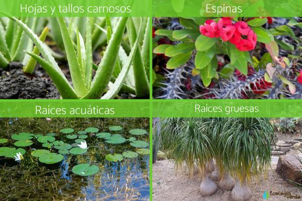 Adaptaciones de las plantas: tipos y ejemplos - Tipos de adaptaciones de las plantas
