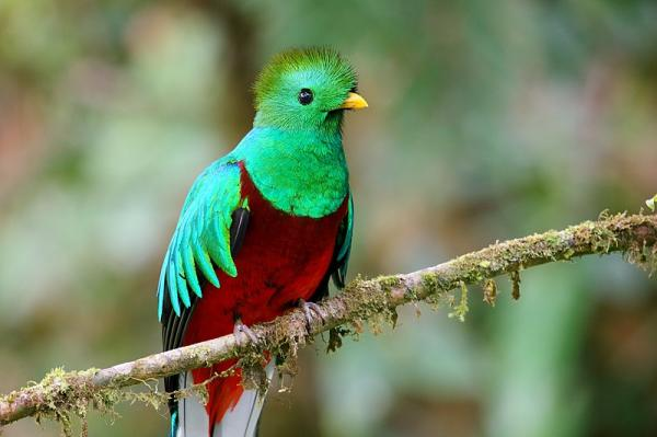 25 animales en peligro de extinción en México - Quetzal