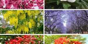 18 árboles con flores