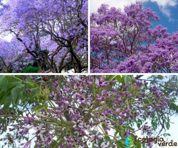 18 árboles con flores - Árboles con flores moradas y azules