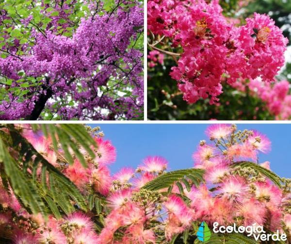 18 árboles con flores - Árboles con flores rosas