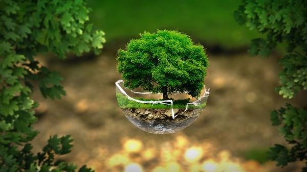 Cuál es la importancia de los bosques y selvas