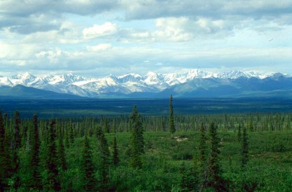 Cuál es la importancia de los bosques y selvas - Qué son los bosques