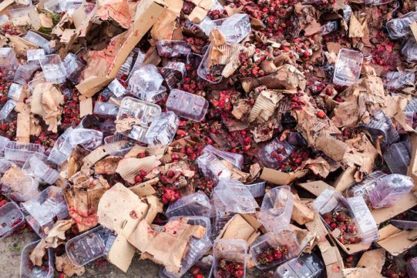 Desperdicio de alimentos: causas, consecuencias y cómo evitarlo - Consecuencias del desperdicio de alimentos