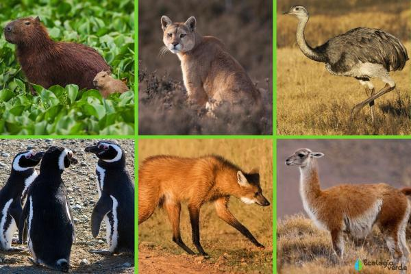 Animales autóctonos de Argentina - Otros animales autóctonos de Argentina