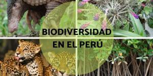 Biodiversidad en el Perú: características e importancia
