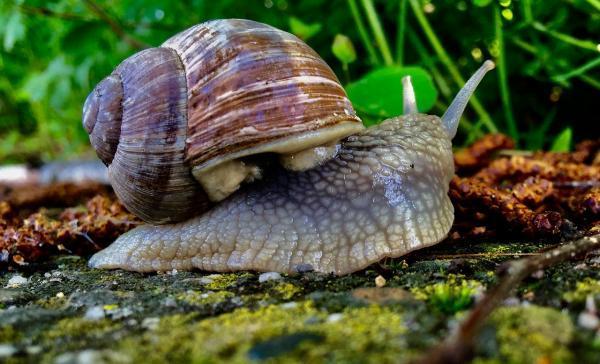 Cuáles son los animales que reptan para desplazarse - Otros ejemplos de animales que reptan