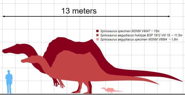 Dinosaurios carnívoros: nombres, tipos, características e imágenes - Spinosaurus o espinosaurio: características