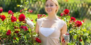 Plantar esquejes de rosal: preparación y cómo hacerlo