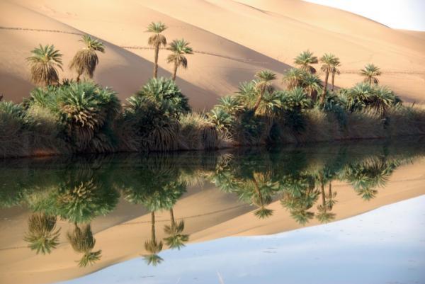 Animales del desierto: características y nombres