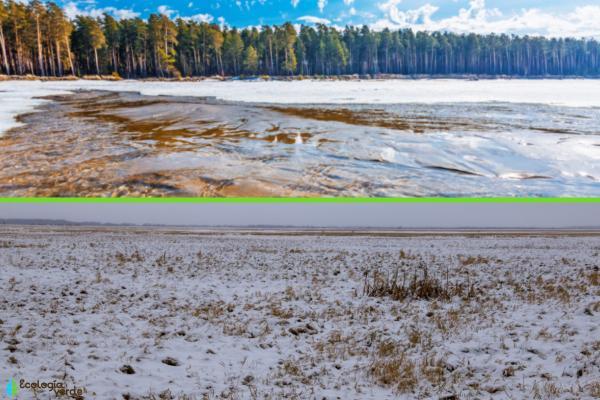 Regiones naturales de Asia - Llanuras de Siberia