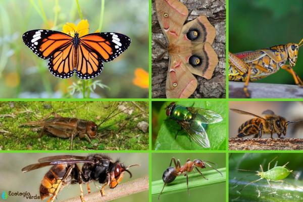 Animales que viven en el campo - Insectos