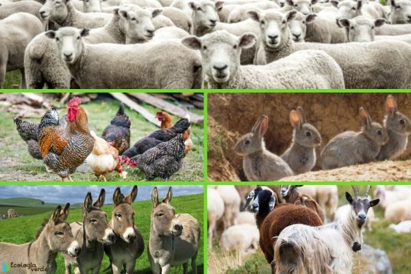 Animales que viven en el campo - Otros animales que viven en el campo