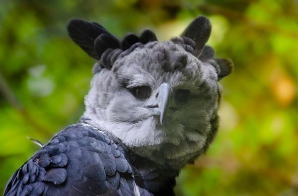 17 animales en peligro de extinción en Ecuador