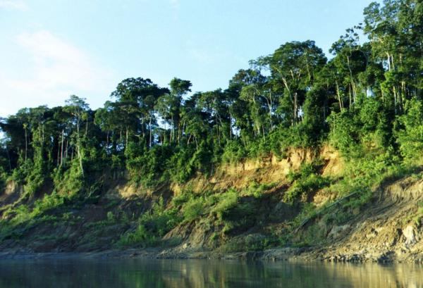 Las ecorregiones de Bolivia y sus características -  Bosque amazónico suroccidental