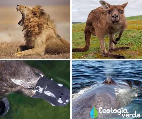 +105animales que respiran por pulmones - Animales con respiración pulmonar: los mamíferos