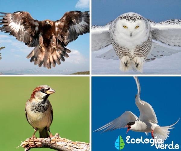+105animales que respiran por pulmones - La respiración pulmonar en aves