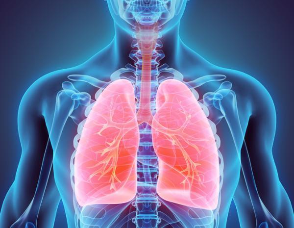 +105animales que respiran por pulmones - Qué es la respiración pulmonar