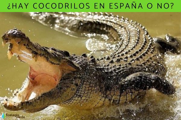 ¿Hay cocodrilos en España?
