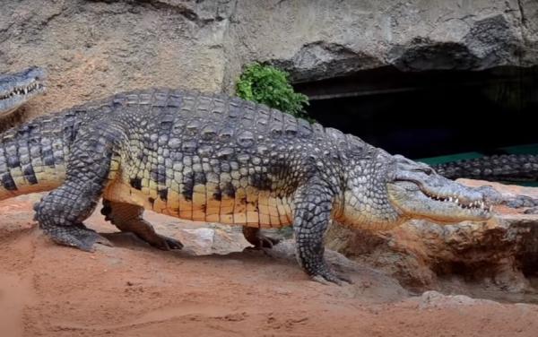 ¿Hay cocodrilos en España? - Por qué puede haber cocodrilos en España