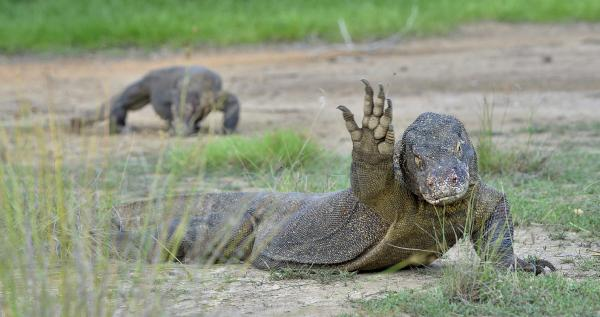Cuáles son los animales carroñeros: ejemplos - Reptiles que son carroñeros
