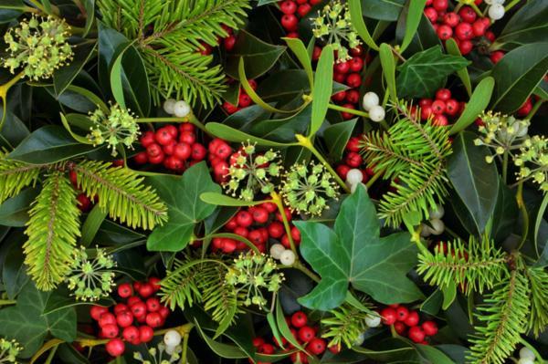 Cuidados del acebo - Cómo decorar con acebo en Navidad