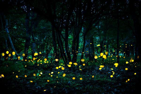 15 curiosidades de la naturaleza que te sorprenderán - La bioluminiscencia