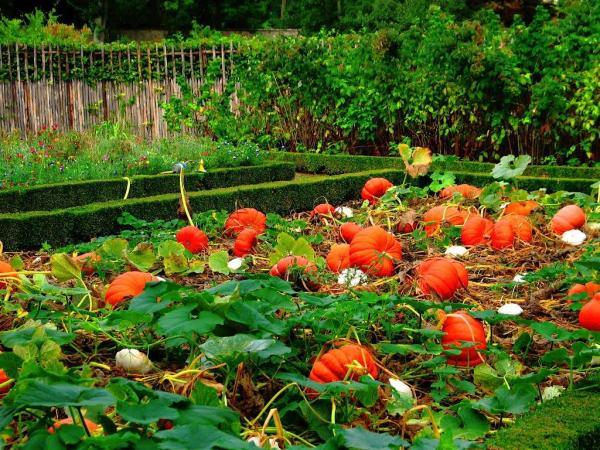 ¿Qué hortalizas plantar en verano? - Calabaza