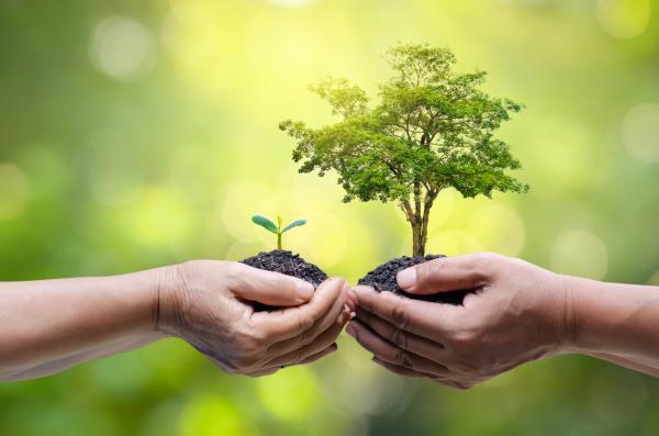 Cuáles son las ramas de la ecología y qué estudia cada una