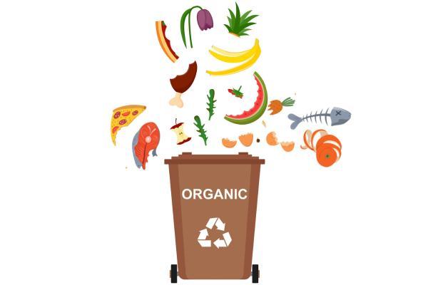 Qué es la basura orgánica y ejemplos - Ejemplos de basura orgánica