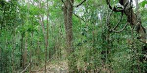 Selva seca: características, flora y fauna