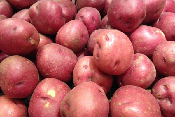 Tipos de patatas - Patata Red Pontiac