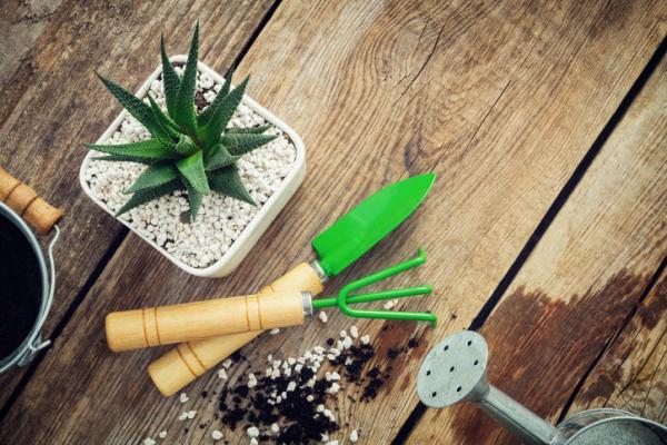 Perlita para plantas: qué es, para qué sirve y cómo se usa - Cómo se usa la perlita para las plantas