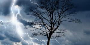 Por qué los árboles atraen los rayos