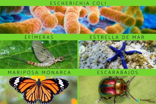 Especies indicadoras: qué son y ejemplos - Ejemplos de especies indicadoras de fauna