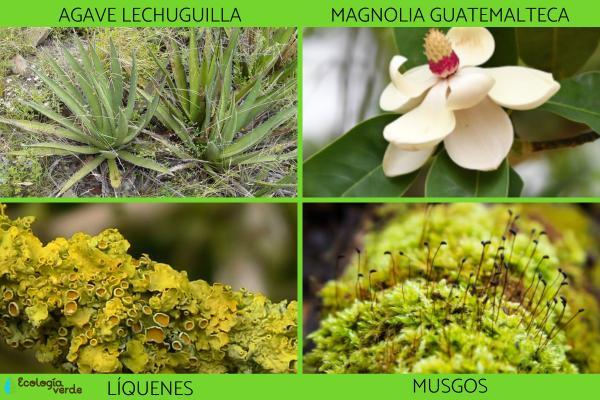 Especies indicadoras: qué son y ejemplos - Ejemplos de especies indicadoras de flora