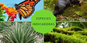Especies indicadoras: qué son y ejemplos