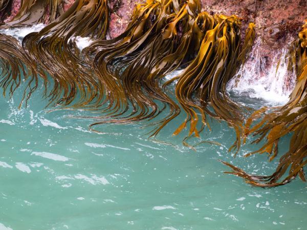 Semejanzas y diferencias entre plantas y algas - Qué es una planta y qué es un alga