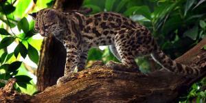 34 animales en peligro de extinción en Argentina