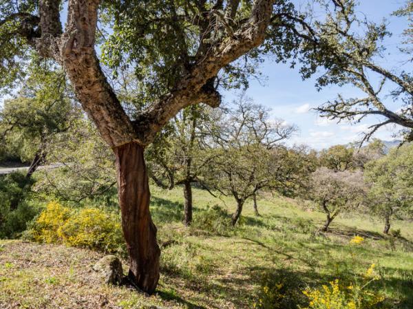 Qué es la silvicultura o explotación forestal - Qué es la silvicultura - definición