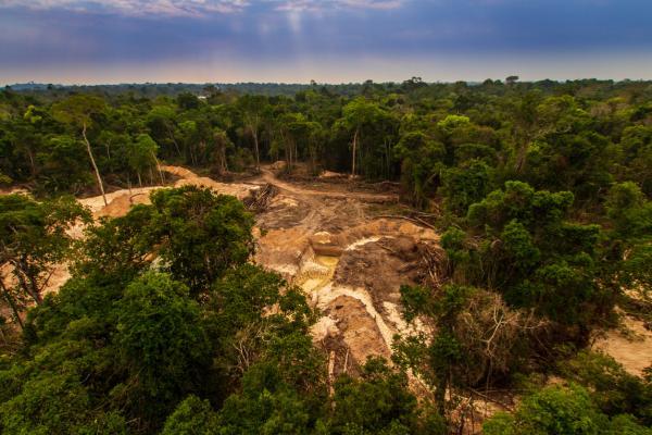 Recursos naturales de Brasil - Madera