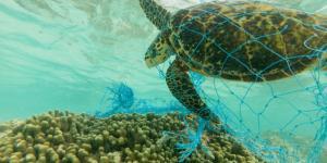 Contaminación marina: causas y consecuencias