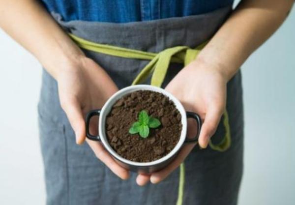 Cómo plantar menta - Cómo plantar menta por esquejes y reproducirla