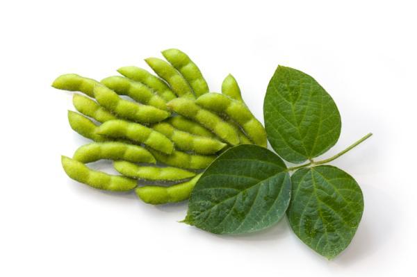 Cuáles son los alimentos transgénicos: lista de ejemplos - Lista de ejemplos de alimentos transgénicos