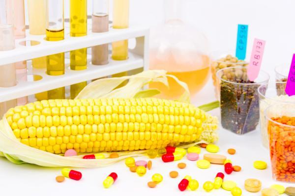 Cuáles son los alimentos transgénicos: lista de ejemplos - Producción actual de alimentos transgénicos en el mundo