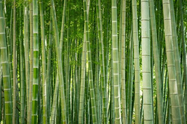 Cómo cuidar un bambú - Ubicación para el bambú
